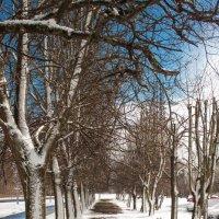 мартовский снег :: Диана Матисоне