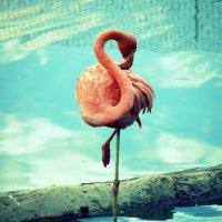 Фламинго :: Saniya Utesheva