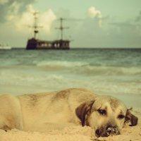 Собака на пляже :: Кирилл Антропов