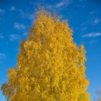 Осень золотая :: Александр Фищев