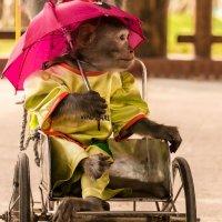Леди с зонтиком :: Жанна Мальцева