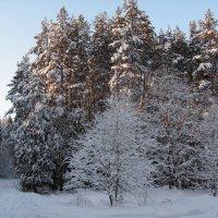 Зимний пейзаж :: Михаил *******