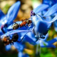 путешествие с муравьём в мир первоцветов :: ~ Лидия ~