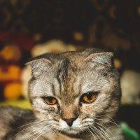 кошка :: Илья Мулюкин
