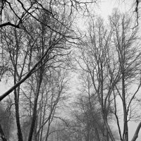 Одиночество :: Олег Потехин