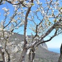 Крымская  весна :: Елена Залерцева