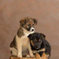 Собаки из частного приюта Натальи Беликовой в Смоленске :: Анатолий Тимофеев