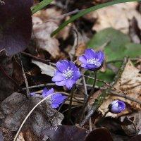 Весна :: AstaA