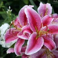 Flowers (0246) :: Виктор Мушкарин (thepaparazzo)