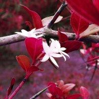 Неизвестное мне растение :: Елизавета Сноу