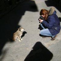 Фотосессия. Терпеливый каталонский пёсик :: Марина Домосилецкая