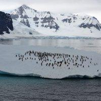 Антарктические зайцы :: Татьяна Васильева
