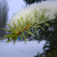 Последний снег :: Дмитрий Булда