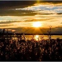Спокойное солнце :: Василий Хорошев