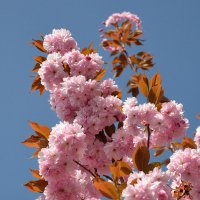Цвет весны :: Boris Alabugin