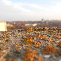 На крыше. :: Юлия Поседкина