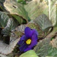 неизвестный цветок :: Юлия Закопайло