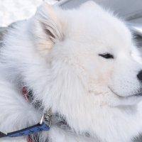 снежный-нежный :: Юлия Золотухина