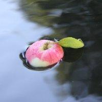 Плод созрел. :: Андрей