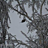 Зима- Прекрасная пора ... :: Александра Бубнова