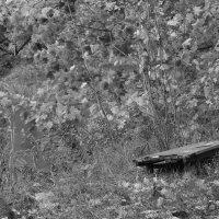 Одинокая скамейка :: Кирилл Антропов