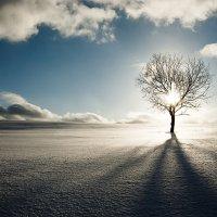 В оковах дерева... :: Андрей Иванов