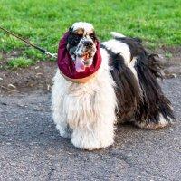 Как вам мой шарфик? :: Геннадий Калюжный