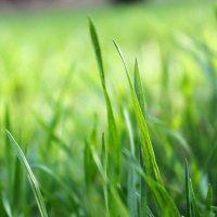 Травка зеленеет, солнышко блестит... :: Olga Volkova