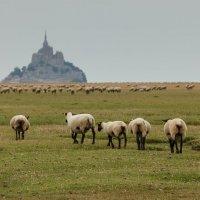 Mont St. Michel :: Алексей Соловьев