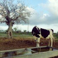 farm :: Jumanazar Koichubekov