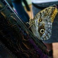 бабочка :: Любовь Вящикова