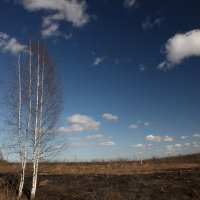 запах весны :: Михаил Антонов