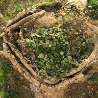 Зеленое гнездо :: Марина Сеньшина