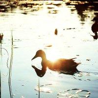 Маленький пруд :: Анастасия Володина