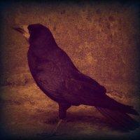 Ворон Nevermore :: Ник Карелин