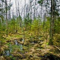 Налибоцкие болота :: Евгения Стасеня