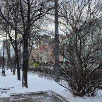 март.опять зима... :: Галина R...
