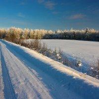 Зимний контраст... :: Александр Никитинский