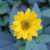 Flower :: Александра Бубнова