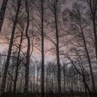 мартовский закат :: Алексей -