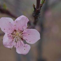 весна:))) :: İsmail Arda arda