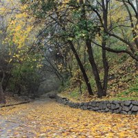 Бредит прошлым парк уснувший, :: Volodymyr Shapoval VIS t
