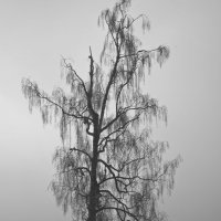 Вены тумана :: Михаил Смуров