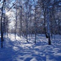 В зимнем парке. :: Rafael