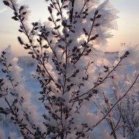 Зима :: Михаил Вандич