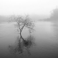 большая вода... :: Ирина Лепихина