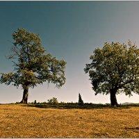 Ты моё дерево... :: Татьяна Губина