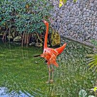 фламинго :: Alex