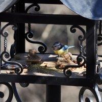 А это весёлая птица-синица, которая часто ворует пшеницу в доме, который построил Джек. :: Ирина Данилова
