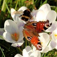 Бабочка :: Татьяна Беляева